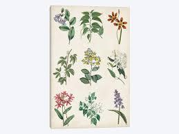 Botanical Chart Print Botanical Chart I Art Print By Vision Studio Icanvas