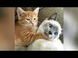 ultra funny cats kittens try not to