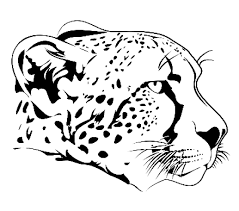 Cheetah Illustration Of Cheetah Head In