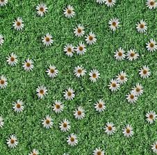 grass and flowers background. Modren Flowers Chamomile Flowers On The Green Grass Background  Stock Photo Colourbox On Grass And Flowers