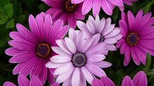 Images, Flower Photo Download/Hd ...