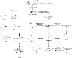 Figure 1 From Overview Prostaglandins Antidiuretic Hormone