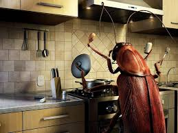 kitchen cabinet best way to get rid of roaches in kitchen best