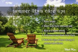 Summer Lawn Care Blog