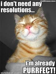 cat new year holiday - Cat memes - kitty cat humor funny joke gato ... via Relatably.com