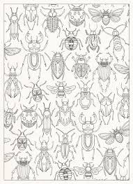 Small Picture Bug Coloring Page 727 zvata Pinterest Insects