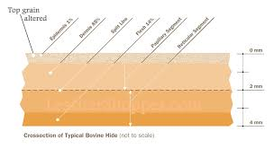 leather hide cross section enlarge diagram top grain leather