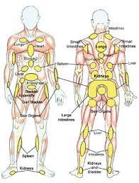 Whole Body Chart Reflexology Chart Whole Body Massage Therapy