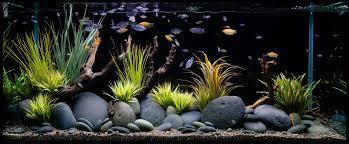 Fish Tank Tropical Maintenance Fish Tank Boys