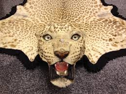 antique taxidermy van ingen leopard skin rug real hunt trophy india pre cites 1778076609