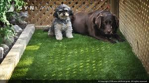 artificial grass for pets. Artificial-grass-safe-for-pets-005 Artificial Grass For Pets