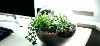 best indoor plants for office. Best Office Desk Plants Unique Fice Ideas Cool Flowering Pics Low Light Indoor For E