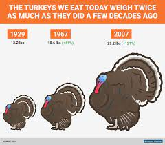 Skinny leftover turkey recipes for weight watchers. How Big Turkeys Were Then And Now