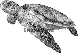 Small Picture Drawing Of Sea Turtle Draw 16jpg Coloring Pages Maxvision