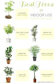 common house plants best indoor safe for cats poisonous to dogs