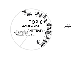 7 Powerful Homemade Ant Killers How To Make A Diy Ant Trap Pest Wiki