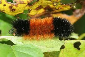 Caterpillar Identification Chart Popular Science