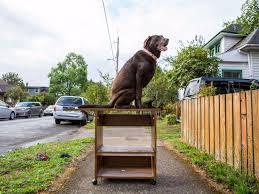Unraveling The Mystery Of Portland's 'Free Stuff' Piles | Northwest |  heraldandnews.com