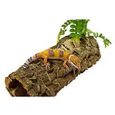 petsmart reptiles for sale. Plain Petsmart Fancy Leopard Gecko To Petsmart Reptiles For Sale