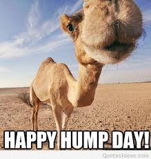 Funny Hump Day Quotes Simple Funny Happy Hump Day Picture Quote