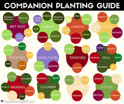Companion Planting Chart 30 Companion Planting Chart For Vegetables Tate Publishing