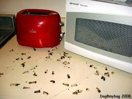 kitchen roaches in kitchen sink modern on kitchen pertaining to
