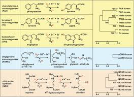 tetrahydrobiopterin biochemistry and pathophysiology   figure