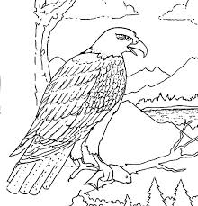 Eagles Coloring Page Bald Eagle With Smooth Feather Coloring Page