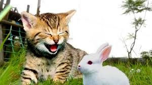 friendship cat pets garden kitten love sweet friends beautiful print gr white kitty brown day clear rabbit forever enjoy paws hd wallpaper