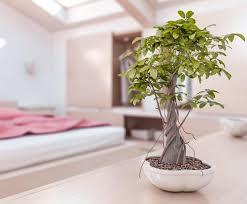 Feng Shui Bedroom And Plants