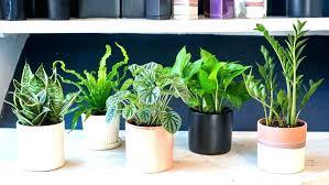modern office plants. Good Office Plants Modern Mesmerizing Full Size Of No  Sunlight Low Maintenance