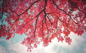 Tree branch wallpaper ...