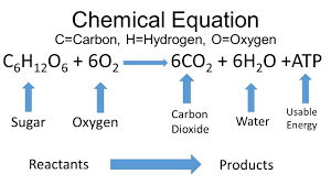 atp chemical equation talkchannels chemical equations worksheet answers quizlet is cellular respiration
