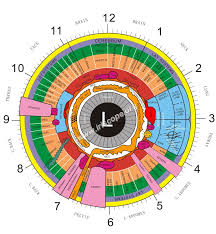 Heres A Quick Way To Left Eye Iridology Chart Iriscope