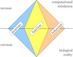 The Six Meaning Facets Of A Bio Model Three Pairs Of