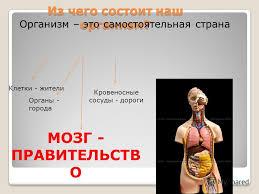 Презентация на тему Организм человека Окружающий мир Урок  2 Из