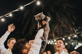 Groom Makes His Cat The Best Man At His Wedding