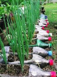 Small Picture Vegetable Garden Pinterest aralsacom