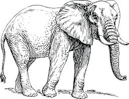 Elephant Coloring Page Forest African Pages Printable Summer Pa
