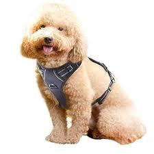 Rabbitgoo Dog Harness Size Chart Rabbitgoo No Pull Dog Harness Collar And Harness Magazine