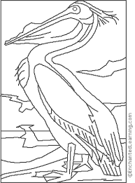 Small Picture Audubon White Pelican Coloring Page EnchantedLearningcom