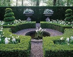 Small Picture topiary trimmed within an inch of its life Topiary and