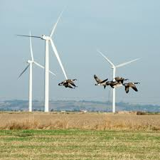 Wind Power Pros And Cons Chart Are Wind Farms A Threat To Wildlife Lets Talk Science