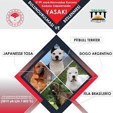 5199 sayılı Hayvanları Koruma Kanunu... - Yalvaç Belediyesi