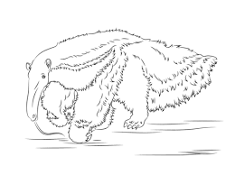 Small Picture Giant Anteater coloring page Free Printable Coloring Pages
