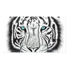 real tiger skin rug white and brown area fur