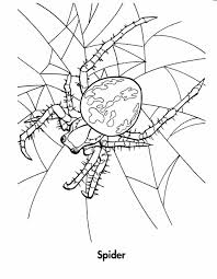 Small Picture Halloween Coloring Pages Spider Web Coloring Pages