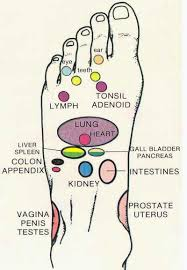 Top Of Foot Reflex Chart Precise Foot Organ Chart Sensual Foot Massage Chart