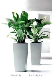 what are some good house plants gallery of luxury what are some good house plants best