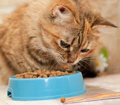 Diabetic Cat Food Chart Your Guide To The Very Best Diabetic Cat Food